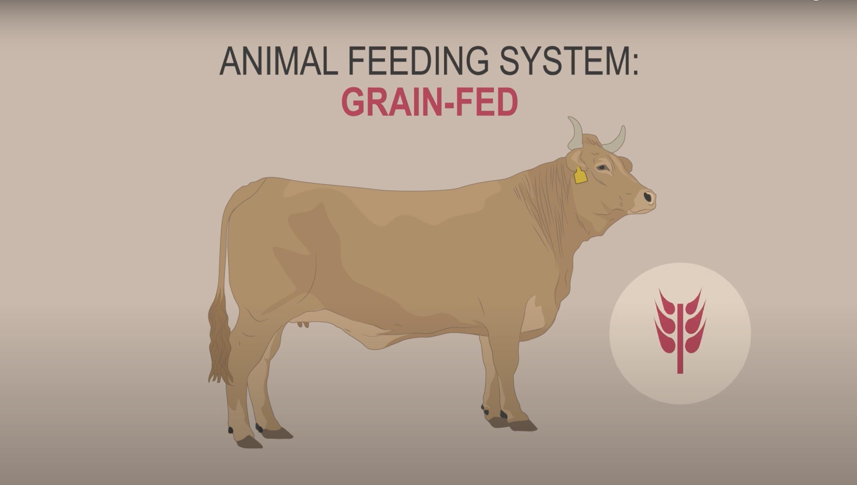 Grain-fed. Animal feeding system